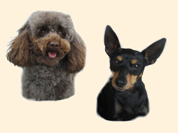 Hunde Vorlagefoto