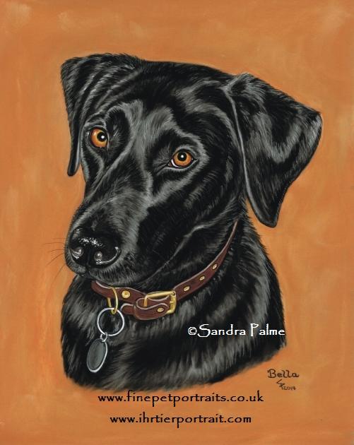Schwarzer Labrador Portrait
