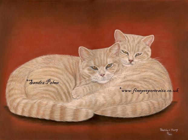 Britisch Kurzhaar Katzen Zeichnung