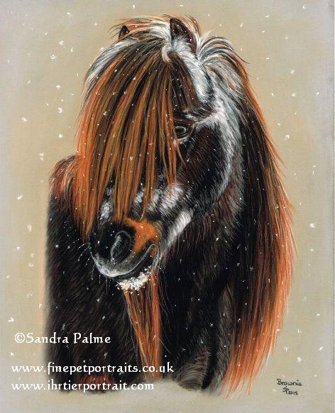 Shetlandpony im Schnee Portrait