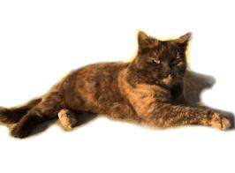 Vorlagefoto Katze