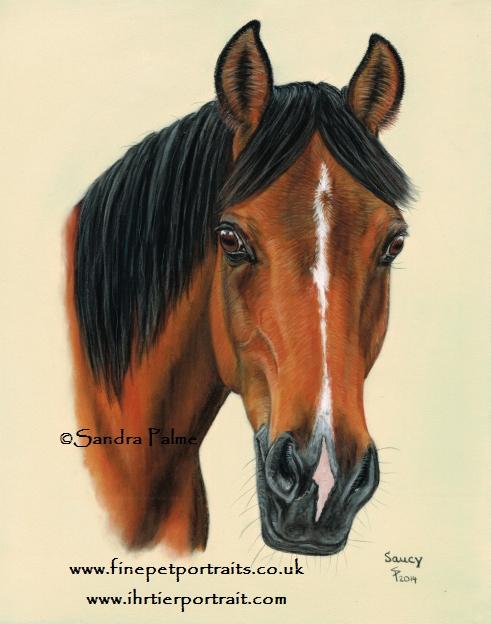 Araber Pferdeportrait