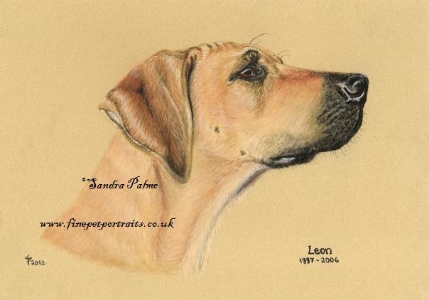 Rhodesian Ridgeback Hunde-Portrait
