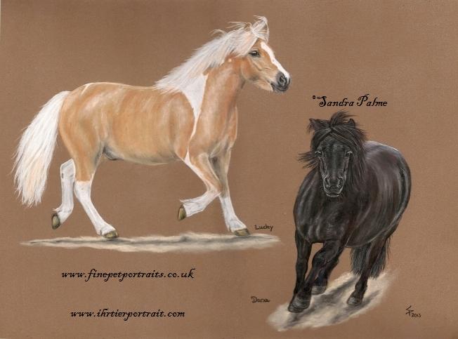 Ponys Pastell-Portrait