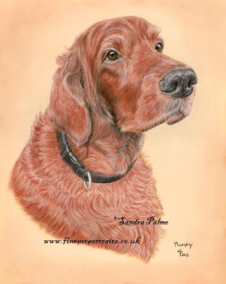 Irish Setter Hunde-Portrait