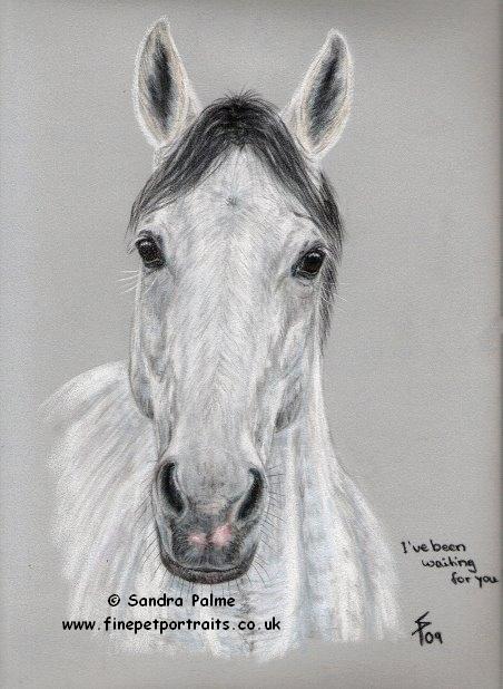 Schimmelwallach Pferde-Portrait