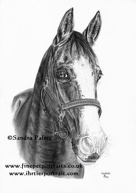 Fuchswallach Pferd Kohle Portrait