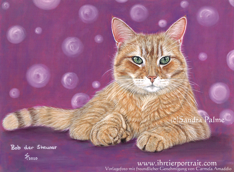 Bob der Streuner, Kater, Katze, Katzenportrait
