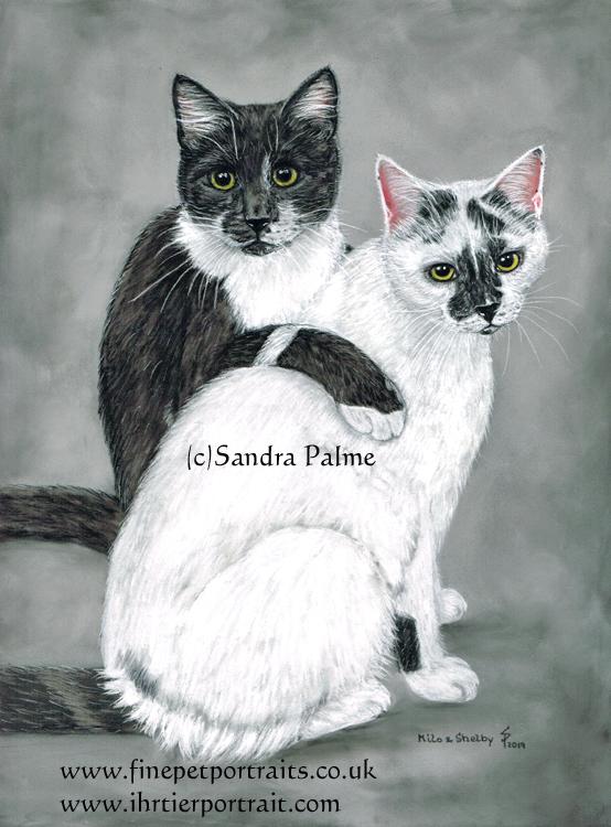 Katzen Milo und Shelby Zeichnung