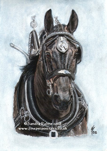 PERCHERON-HENGST AQUARELL