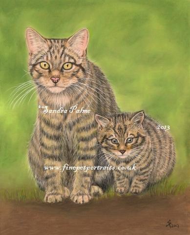 Schottische Wildkatzen