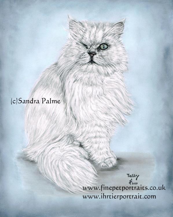 Perser Katze Perserkatze Portrait