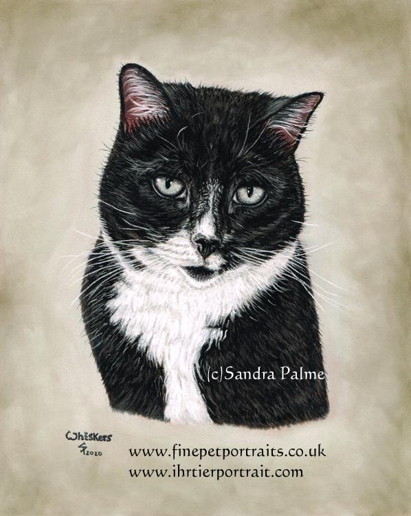 Katze, Katzenportrait in Pastell